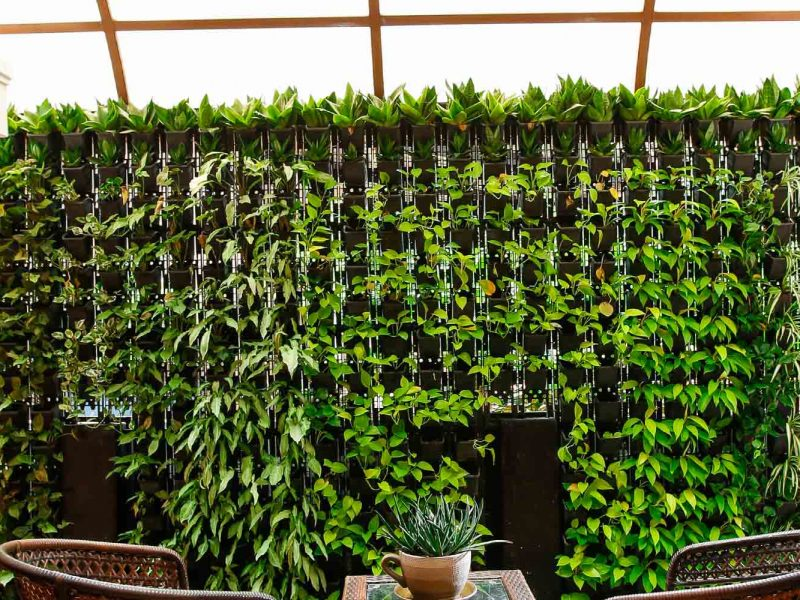 Vertical Garden Plants Thrissur
